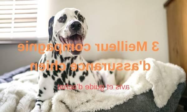 cic assurance animaux