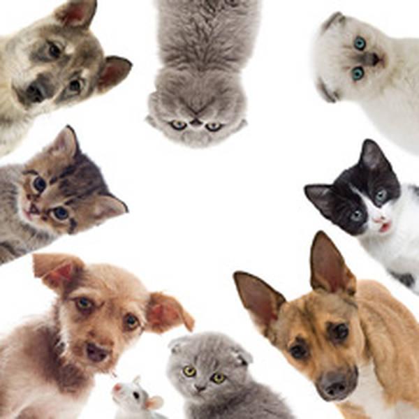 eca assurance animaux avis