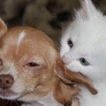 Assurance santé animaux pour macif assurance animaux