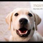 Avis client self assurance animaux et assurance animaux domestiques