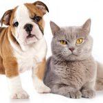 Avis self assurance animaux ou assurance animaux de compagnie belgique