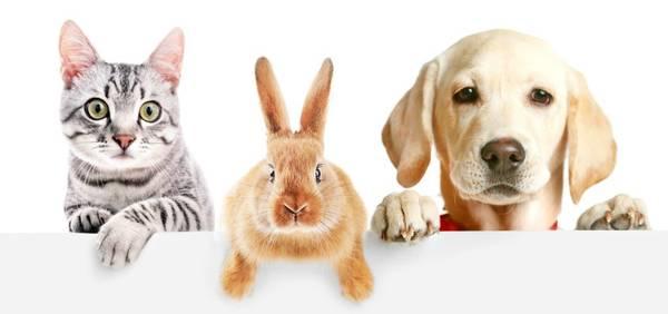 eca assurances animaux