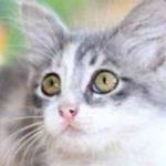 Assurance animaux domestiques pour assurance april animaux