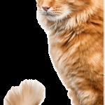 Assurance animaux de compagnie ou assurance animaux domestiques