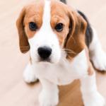 Que choisir assurance animaux et assurance santé animaux