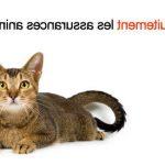 Comparateur assurance animaux et 60 millions de consommateur assurance animaux